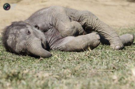 Слоны из Национального парка Непала