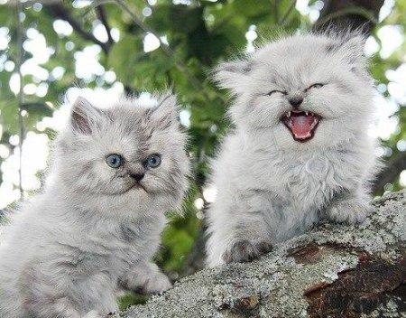 Свирепый котенок сторожит арбуз