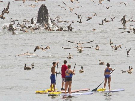 Горбатые киты у калифорнийского побережья