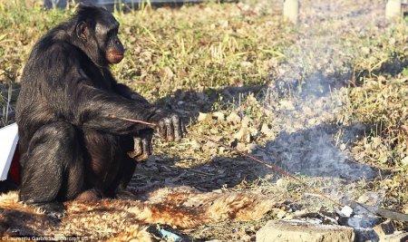 Очень умный примат