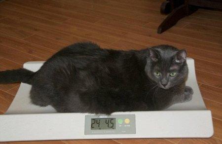 Кот, который смог похудеть