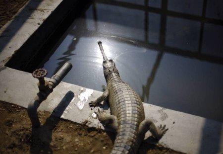 Крокодилы тоже нуждаются в ласке