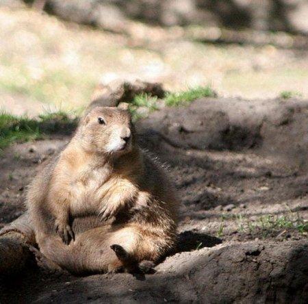 Животные, которым стоит похудеть