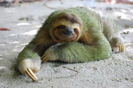 Смешные животные (32 фото)