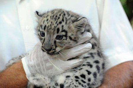 Массовое рождение белых хищников
