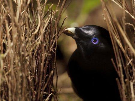 Лучшие фотографии животных от National Geographic