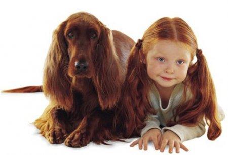 Дети и собаки