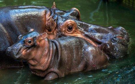 Лучшие фотографии животных за неделю (16 фото)