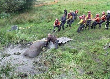 Спасение лошади из грязевой ловушки