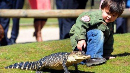 Мальчик с рептилиями