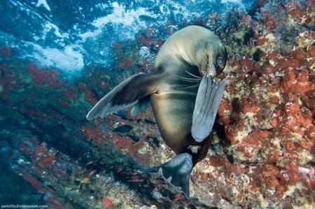 Подводный мир от Александра Сафонова