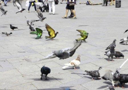 """Проект """"голуби такие же птицы как другие"""""""
