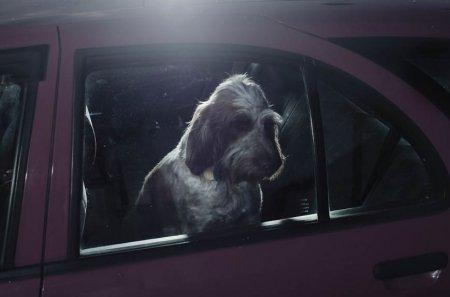Собаки в ожидании своих хозяев