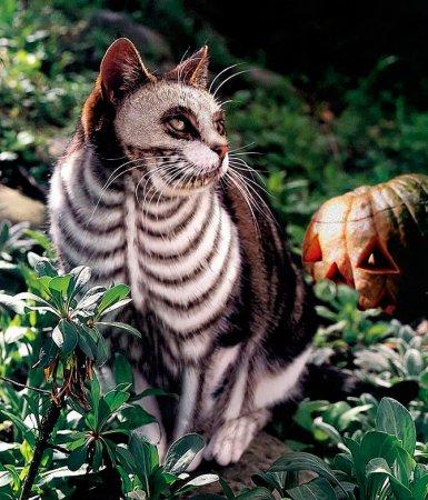 Раскрашенные кошки