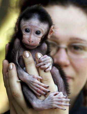 Детеныши животных (28 фото)