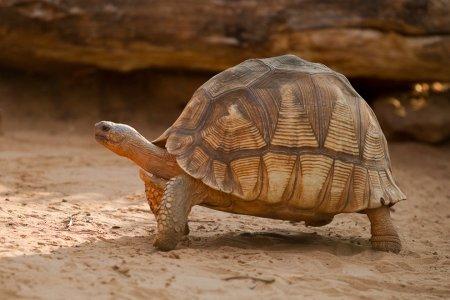 Животные на грани вымирания