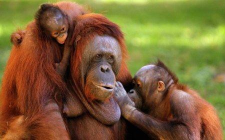 Фотографии животных нашей планеты