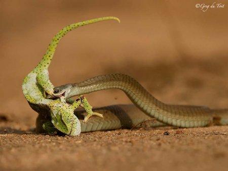 Жутко красивые змеи