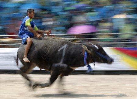 Тайские фермеры соревнуются в скачках на буйволах
