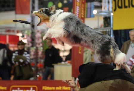 """Домашние животные на ежегодной выставке """"Heimtiermesse Berlin 2012"""""""