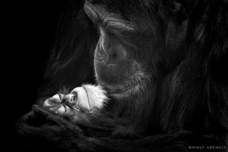 Черно-белые фотографии животных, сделанные Вульфом Адемайтом
