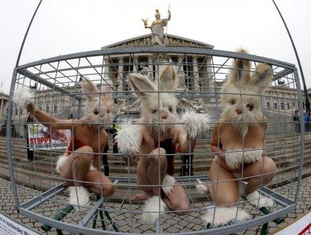 Акция в защиту животных у здания парламента Австрии