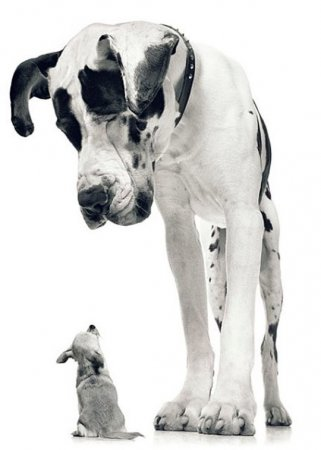 Необыкновенные фотопортреты животных в работах Тима Флака