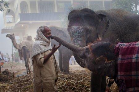 "На ярмарке слонов ""Сонепур Мела"""