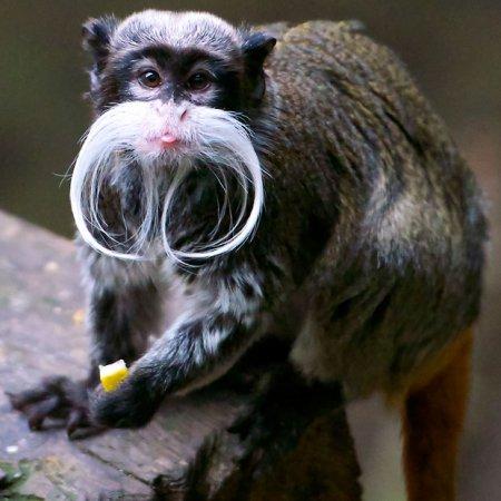 Коллекция лучших фотографий забавных животных за неделю