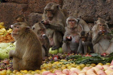 Царство обезьян в Таиланде на один день стало фруктовым
