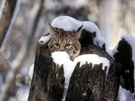 Фотографии очаровательных зверят (41 шт)