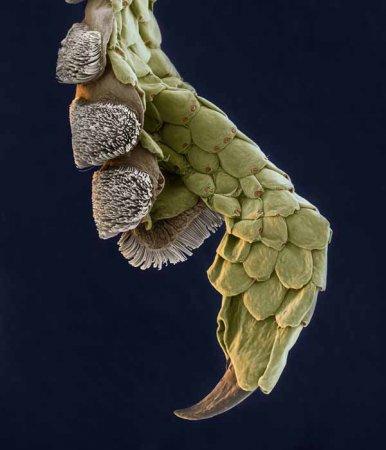 15 Невероятных макрофотографий насекомых