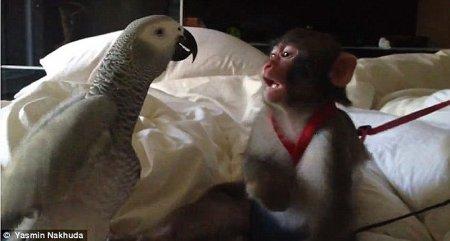 История Ясмин и ее обезьянки Дарвина