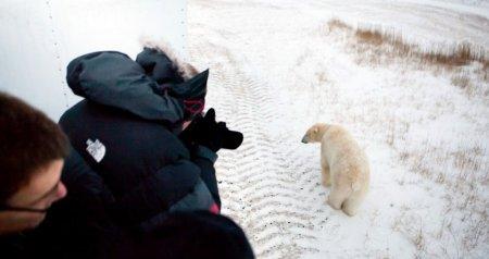 Интересные факты о полярных медведях