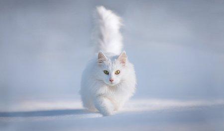 Лучшие коты сезона