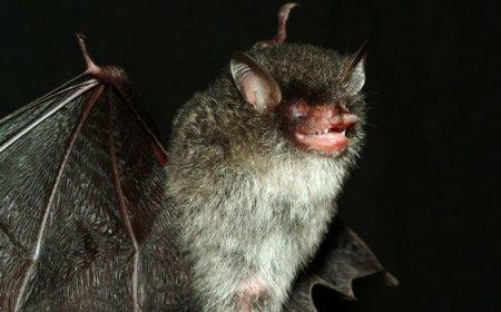 9 Новых видов животных, обнаруженных в районе Большого Меконга
