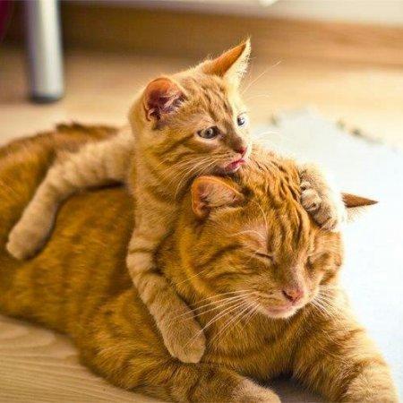 Умилительные детеныши со своими мамами (30 фото)