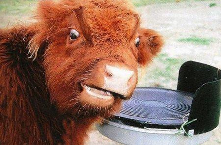 Самые забавные фотографии с животными за прошлый год (37 шт)