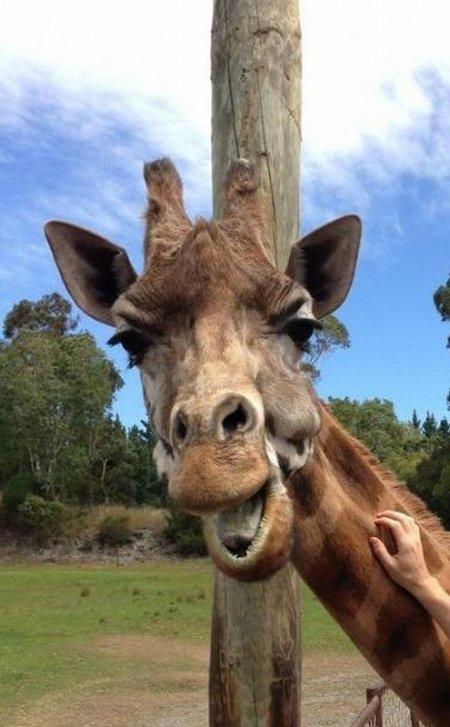 В объективе – очаровательные животные (42 фото)