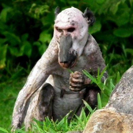 Необычный вид облысевшей самки бабуина (4 фото)
