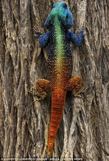 Восхитительные краски природы (21 фото)
