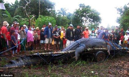 На Филиппинах умер самый крупный в мире крокодил (6 фото)