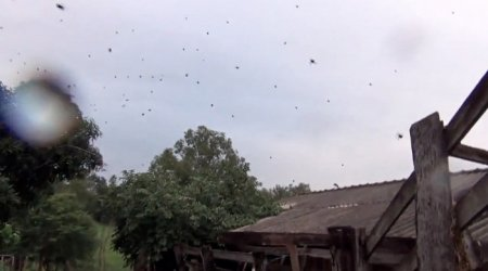 """Аномальный """"дождь из пауков"""" в Бразилии (2 фото + видео)"""