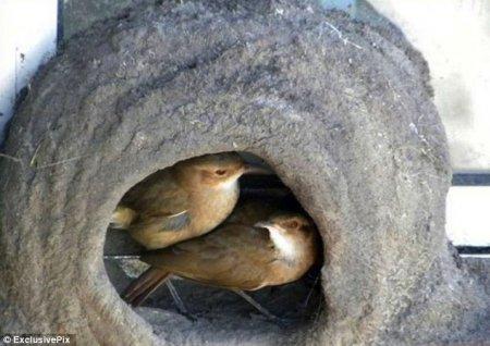 Как птицы вьют свои гнёзда (7 фото)