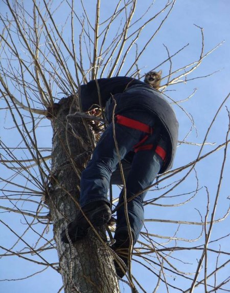 История спасения кота с верхушки дерева в фотографиях