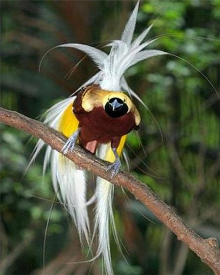 Яркий окрас тропических птиц (10 фото)