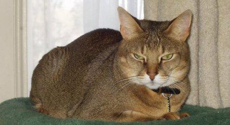 Самые красивые породы кошек (101 фото)