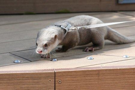 Детёныш выдры – новый обитатель зоопарка Sunshine City Aquarium (7 фото + 1 видео)