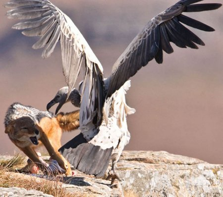 Мир животных в фотографиях (19 шт)