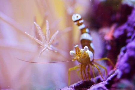 Красивые фотографии подводных обитателей (15 фото)